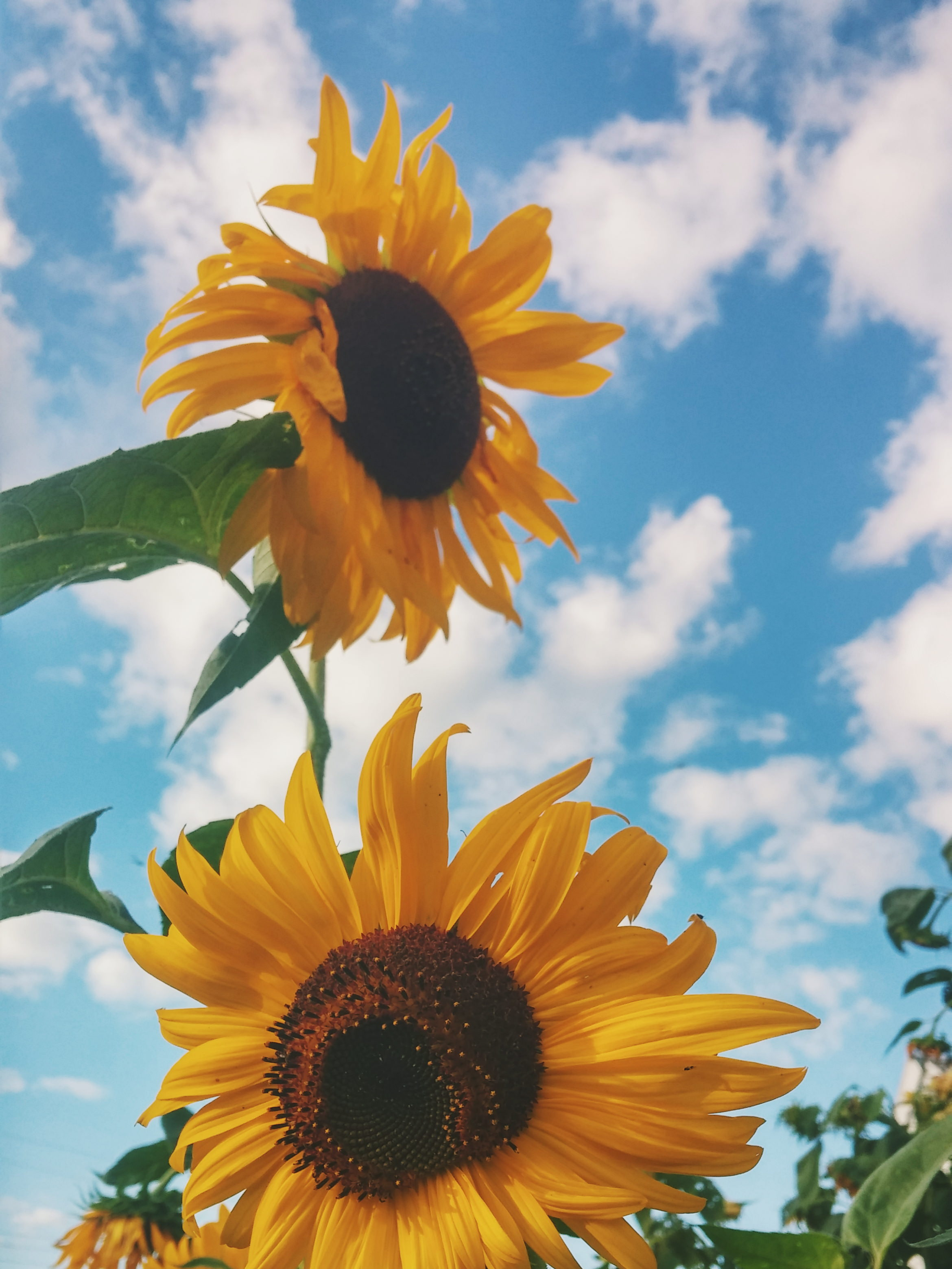 周囲にいい影響を与える人に育ってほしい。私達の子育ての、その先にあるもの。